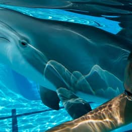 RoboDolphins Could Be Used To Create Animal-Friendly Animatronic Aquariums