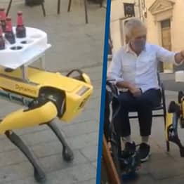 Boston Dynamics Robot Dog Spotted Serving Beers In Spain