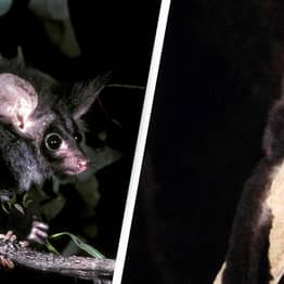 Two New Mammals Discovered In Australia