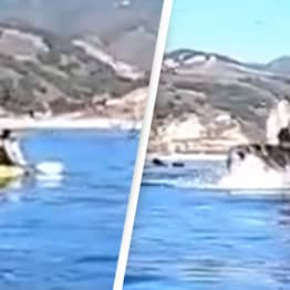 Whale Nearly Swallows Kayakers In Terrifying Video