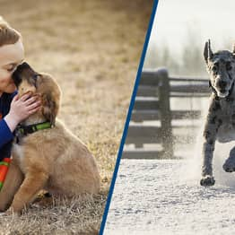Study Shows Humans Kept Dogs As Pets As Early As 11,000 Years Ago