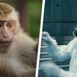 Scientists Double Size Of Monkeys' Brains Using Human Genes