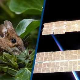 Scientists Sent Mice To Space And Discovered Protein That Could Slow Down Ageing