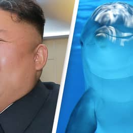 North Korea May Be Militarising Dolphins, Says United States Naval Institute