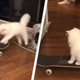 Cat Wins Army Of Fans With Its Incredible Skateboarding Skills