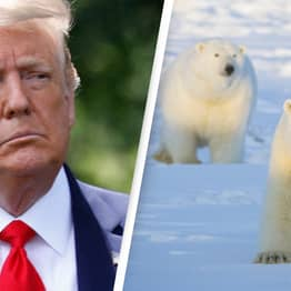 Trump Administration Rushes To Sell Drilling Rights To Arctic National Wildlife Refuge
