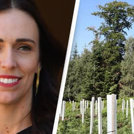 New Zealand Wants People To Turn 2020 Disappointments Into Trees