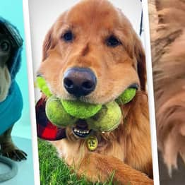 2020 Has Been Awful, So Here Are 20 Of The Year's Most Adorable Dogs