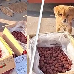 Adorable Puppy Helps Owner Mind Their Food Stall At Busy Street Market