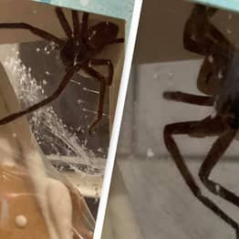 Woman Finds Huge Spider Living In Christmas Gingerbread House