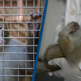 NASA Killed Every Monkey Held At Research Centre In One Day Last Year