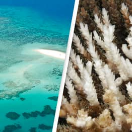 Great Barrier Reef Status Now 'Critical' For First Time