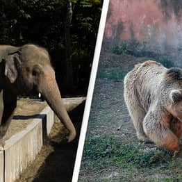 Last Two Animals Freed From 'World's Worst Zoo'