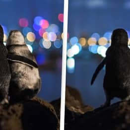 Two Widowed Penguins Comforting Each Other Wins Best Picture Of 2020