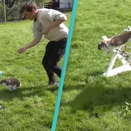 Rabbit Show Jumping Is The Cutest Most Difficult Sport We've Ever Seen
