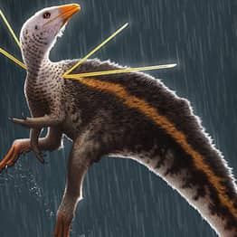 Chicken-Sized Dinosaur With Long Fur Mane And Other Bizarre Features Discovered By Researchers
