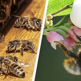 Bees Aren't Getting Enough Sleep Thanks To Pesticides