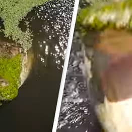 Incredible Footage Captures Moment Crocodile Tries To Snatch Drone Above Water