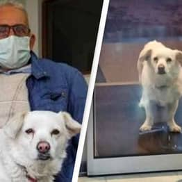 Loyal Dog Waits Six Days Outside Hospital For Her Sick Owner