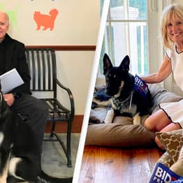 President Joe Biden's Dog Major Is Officially The First Rescue Dog To Live In White House