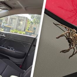 Woman Finds Spider Babies Have Built Huge Web In Her Car