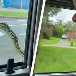 Man Terrified After Hitchhiking Snake Pops Up On Car Window