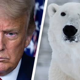 Trump Sells Off 'Sacred' Arctic Wildlife Refuge For Oil Drilling On Final Day In Office