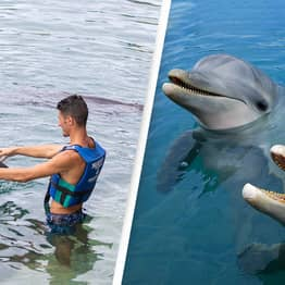 Humans And Dolphins Have Similar Personality Traits, Study Finds