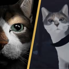 New Horror Game Etched Memories Lets You Play As A Cat