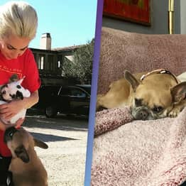 Lady Gaga's Stolen Dogs Returned By Woman After $500,000 Reward Offered