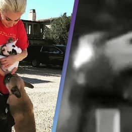 Shocking New Footage Shows Moment When Lady Gaga's Dogs Were Stolen