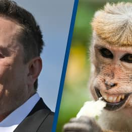 Elon Musk Says He's Wired Up A Monkey's Brain To Play Video Games