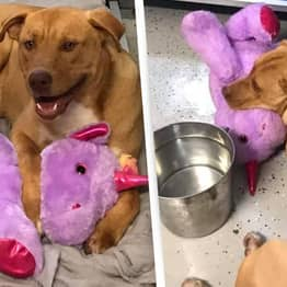 Stray Dog Who Kept Stealing Toy Unicorn Has It Bought For Him By Animal Control