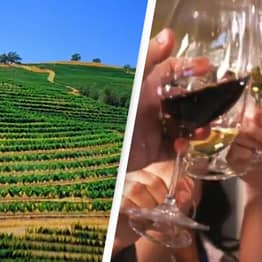 This Winery Will Pay You $10,000 A Month To Work And Live Rent-Free In California