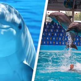 Australian State Bans Dolphin Shows With New Law Ending Breeding Of Captive Animals
