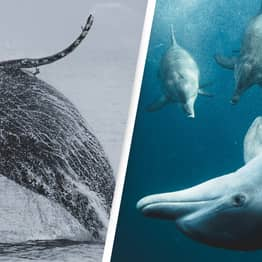 At Least 25% Of Marine Mammals Are Heading For Extinction, Study Finds