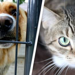 Los Angeles Officially Recognised As A 'No-Kill' City For Animal Shelters