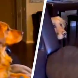 Dog Hides Behind Sofa After Seeing Darth Vader For First Time