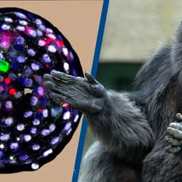 Scientists Successfully Create Embryos That Are Part Human, Part Monkey