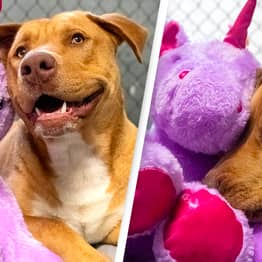 Stray Dog Who Kept Stealing Toy Unicorn Gets Rehomed With Favourite Toy