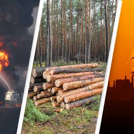 Ecocide Movement Wants To Make Any Act That Could Harm The Planet Illegal