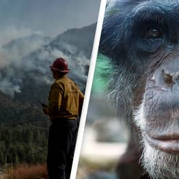 Only 3% Of Earth's Habitats And Animal Populations Haven't Been Disturbed By Humans, Study Finds