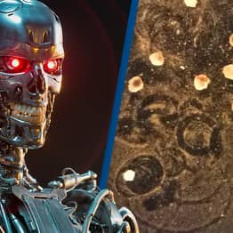 Breakthrough 'Living Robots' That Have Memory Created By Scientists