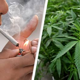 Majority Of American Adults Think Weed Should Be Legal For Medical Or Recreational Reasons