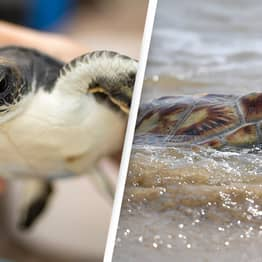 Turtles 'One Of Only Animals' That Can Breathe With Their Butts