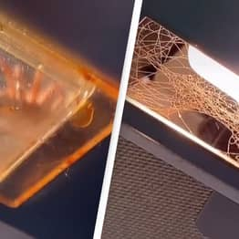 Woman Finds Huge Spider In Extractor Fan, Tries To Get It Down By Herself