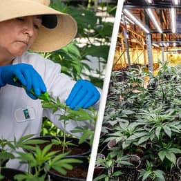 Cannabis Industry Rule Change Will 'Unleash New Wave Of Job Creation'