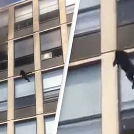 Cat Jumps From Fifth-Floor Of Burning Building And Runs Away Like Nothing Happened