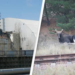 35 Years On, The Chernobyl Exclusion Zone Has Become Home To Rare And Endangered Species