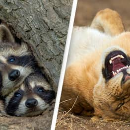 Comedy Wildlife Photography Awards 2021 Calling For More Hilarious Snaps